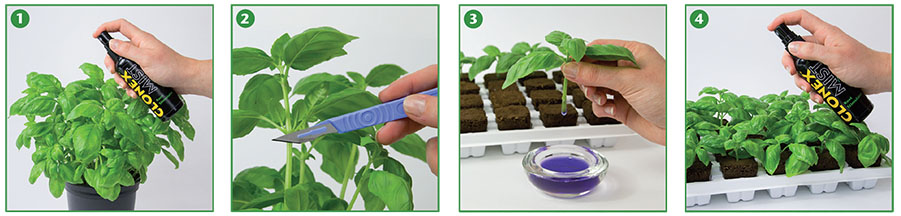 A visual guide to plant cloning using Clonex